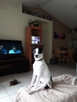 Jack Russell Terrier Puppies for sale in Mt Dora, FL 32757, USA. price: NA