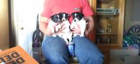 Jack Russell Terrier Puppies for sale in 7902 E Juanita Ave, Mesa, AZ 85209, USA. price: NA