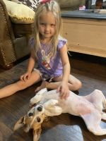 Jack Russell Terrier Puppies for sale in Payson, AZ 85541, USA. price: NA