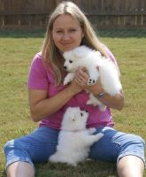 Japanese Chin Puppies for sale in Houston, TX, USA. price: NA