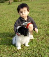 Japanese Chin Puppies for sale in Nevada St, Newark, NJ 07102, USA. price: NA