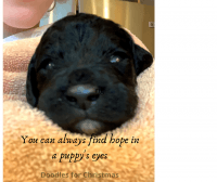 Labradoodle Puppies for sale in Olympia, WA, USA. price: NA