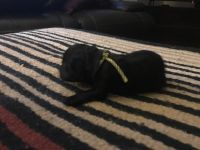 Labradoodle Puppies for sale in Bay Village, OH 44140, USA. price: NA