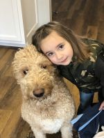 Labradoodle Puppies for sale in Hillsboro, OH 45133, USA. price: NA
