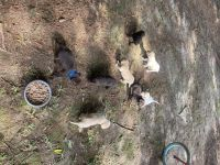 Labrador Retriever Puppies for sale in Franklinton, LA 70438, USA. price: NA
