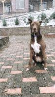 Labrador Retriever Puppies for sale in Arden, NC 28704, USA. price: NA