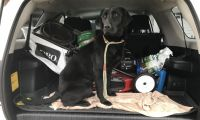 Labrador Retriever Puppies for sale in Turner, OR, USA. price: NA