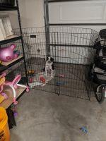 Labrador Retriever Puppies for sale in Menifee, CA, USA. price: NA