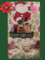 Labrador Retriever Puppies for sale in Johnson County, KY, USA. price: NA