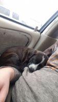 Labrador Retriever Puppies for sale in Savage, MN, USA. price: NA