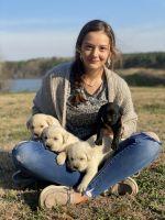 Labrador Retriever Puppies for sale in Timpson, TX 75975, USA. price: NA