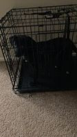 Labrador Retriever Puppies for sale in East Stroudsburg, PA 18301, USA. price: NA