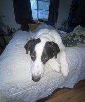 Labrador Retriever Puppies for sale in Austin, TX 78741, USA. price: NA