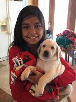 Labrador Retriever Puppies for sale in Byron Center, MI 49315, USA. price: NA