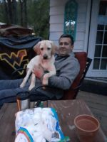 Labrador Retriever Puppies for sale in St Albans, WV 25177, USA. price: NA