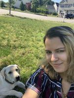 Labrador Retriever Puppies for sale in Marlborough, MA, USA. price: NA