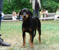 latvian hound dog