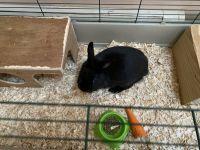 Lionhead rabbit Rabbits for sale in Schnecksville, PA 18078, USA. price: NA