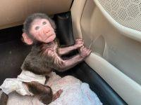 Macaque Animals Photos