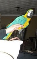 Macaw Birds for sale in Charleston, SC, USA. price: NA
