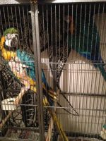 Macaw Birds for sale in Pell City Ave, Sylacauga, AL 35150, USA. price: NA