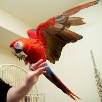 Macaw Birds for sale in TX-121, Blue Ridge, TX 75424, USA. price: NA