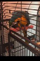 Macaw Birds for sale in Scottsdale, AZ, USA. price: NA