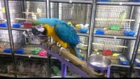 Macaw Birds for sale in United States of America, Douala, Cameroon. price: NA