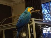 Macaw Birds for sale in Northview Ave, Anderson, SC 29625, USA. price: NA