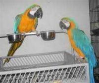 Macaw Birds for sale in New York, NY, USA. price: NA