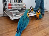 Macaw Birds for sale in Clifton, NJ, USA. price: NA