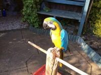 Macaw Birds for sale in Virginia Beach, VA, USA. price: NA