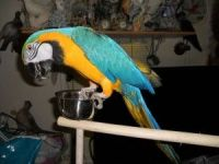 Macaw Birds for sale in Los Angeles County, CA, USA. price: NA