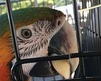 Macaw Birds for sale in Coto De Caza, CA 92679, USA. price: NA