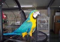 Macaw Birds for sale in Richmond, VA, USA. price: NA