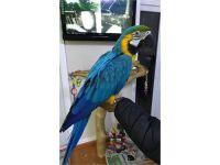 Macaw Birds for sale in Roanoke, VA, USA. price: NA