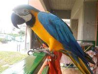 Macaw Birds for sale in Sacramento, CA, USA. price: NA