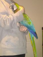Macaw Birds for sale in Los Angeles, CA 90001, USA. price: NA