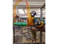 Macaw Birds for sale in Dallas, TX 75247, USA. price: NA