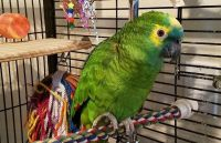 Macaw Birds for sale in Buffalo, NY, USA. price: NA