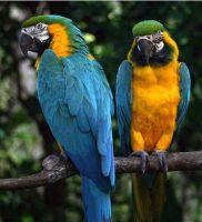 Macaw Birds for sale in TX-121, McKinney, TX, USA. price: NA