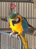Macaw Birds for sale in Washington, DC 20068, USA. price: NA