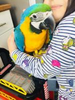 Macaw Birds for sale in Salt Lake City, UT 84101, USA. price: NA