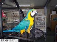 Macaw Birds for sale in Birmingham, AL, USA. price: NA