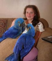 Macaw Birds for sale in Fort Worth, TX, USA. price: NA
