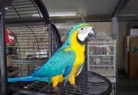 Macaw Birds for sale in Cincinnati, OH, USA. price: NA