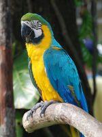 Macaw Birds for sale in San Jose, Costa Mesa, CA 92626, USA. price: NA