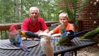 Macaw Birds for sale in Watertown, MA, USA. price: NA