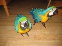 Macaw Birds for sale in Jersey City, NJ, USA. price: NA