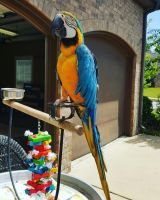 Macaw Birds for sale in Hanford, CA 93230, USA. price: NA